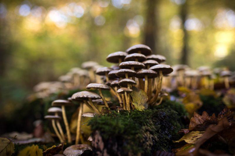 Champignons Dans Les Forêts De Rouen