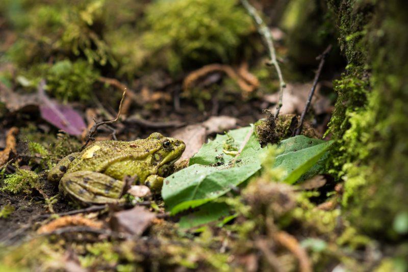 Crapaud Sur La Mousse Du Sol De La Forêt